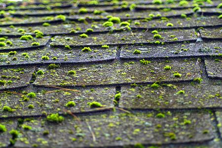 roof leak-ceiling moss-roof moss-florida public adjuster-bulldog adjusters