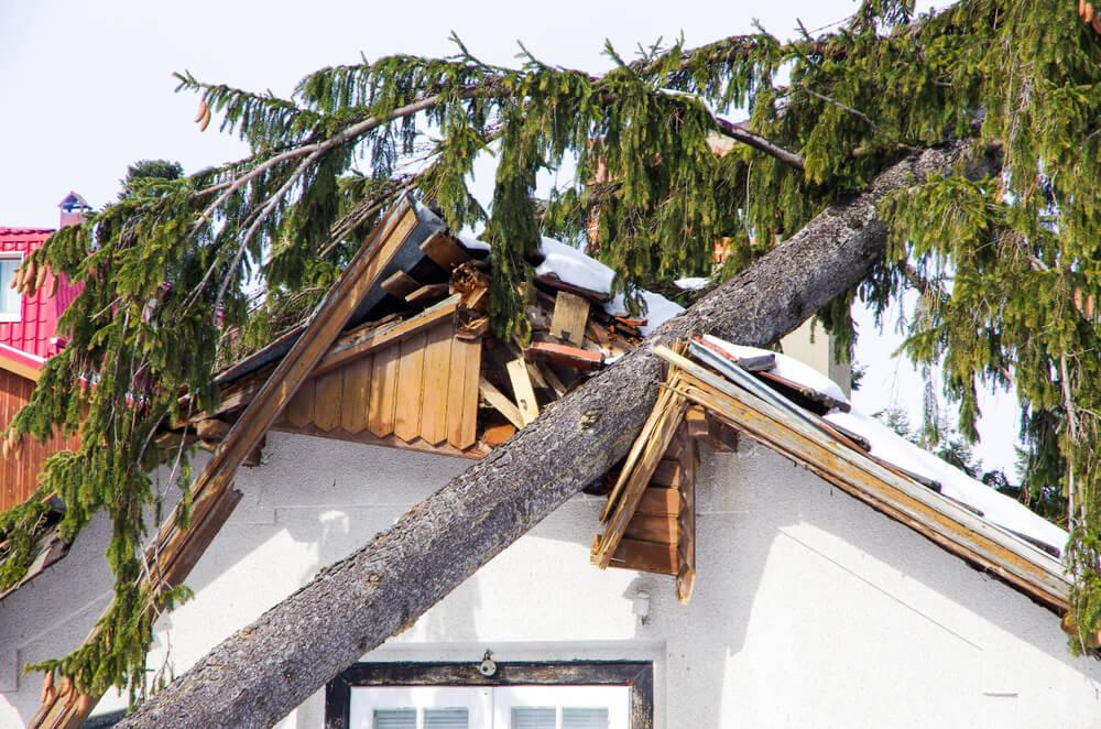 Fallen Tree | Hurricanes | Bulldog Adjusters
