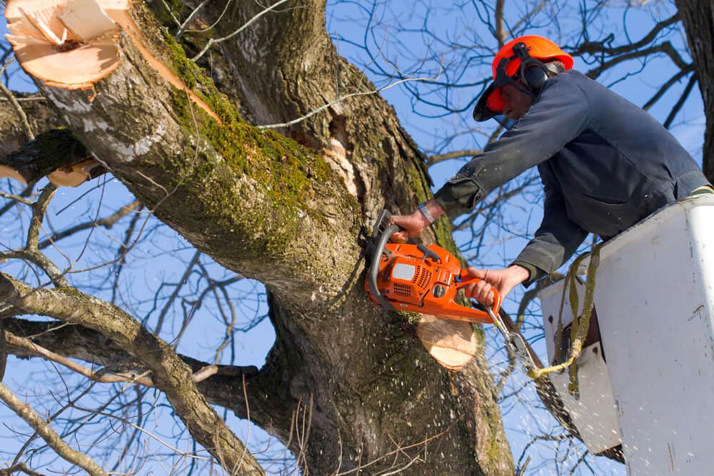 Tree Surgeon | Home Damage | Bulldog Adjusters